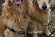 Koira kuvat / Dogit