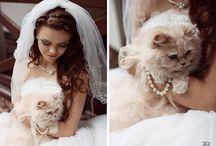Sandra's Cat Wedding