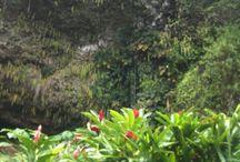 Hawaii / Hawaiian life / by Linda Nix