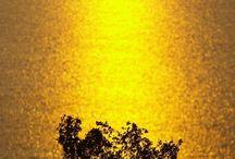 Gold - Golden Glow.