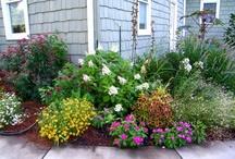 Landscaping & garden ideas / by Paula Barrett