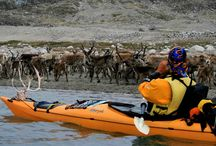 Kayak in Greenland / For kayaking lovers. Greenland kayaking trips for all skills kayaking levels in the best place of the world for kayaking among icebergs.