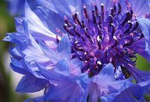 Gardening-Flowers