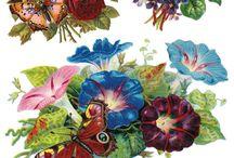 Grafika kolor-kwiaty