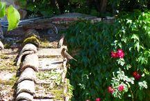 Birds and  Butterflies in Villa le Barone