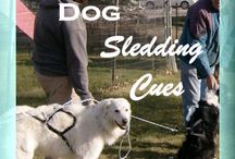Clicker Dog Sledding