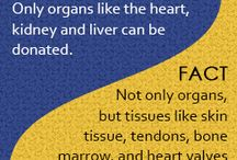 Organ Donation / Explore the importance of specifying if you want to be an Organ Donor or not.