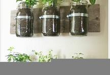 herb garden w mason jars!