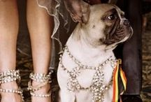 Canina Fashion