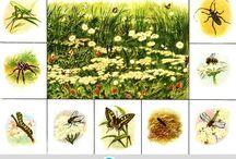 laka przyroda owady
