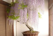 kinti-benti virágok