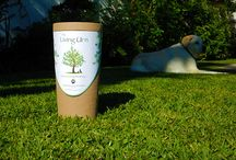 Stuff to Buy / The Living Urn ~ a biodegradable urn and planting system designed to grow a living memory tree, plant or flowers from your loved one's cremated remains!