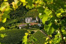 Vinitaly, Vino in Villa, Mostre del Vino & other events
