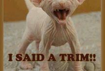 funny animal sayings