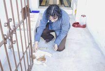 Eu amo e protejo os animais