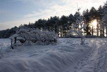Amrum im Winter / Die nordfriesische Insel Amrum bietet in der kalten Jahreszeit für Besucher ganz eigene Reize