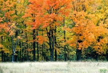 Trees & Forests / Stock Photography by outNbout