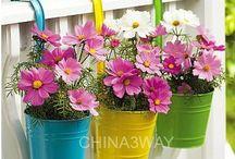 Latas y flores