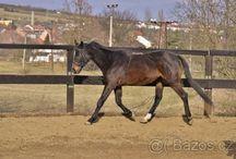 Můj budoucí kůň (možná)