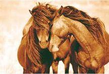 All God's Creatures / Love animals