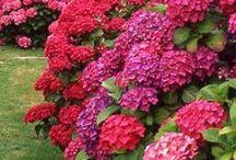 Gardening: Flowers, Bushes & Ornamental Trees / by Diana McKay