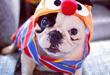 Pets + Costumes = Happy  / #Halloween isn't just for kids...  Check these amazing pets in their fun and fabulous Halloween costumes!