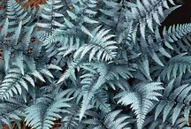 Fern Fronds / Collection of Ferns for the garden / by Lawncare Plus Design~Landscaping Hardscaping Patios Gardening