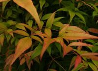 Landscaping-Plants-INFO/CARE / by Jessica Forys-Cameron