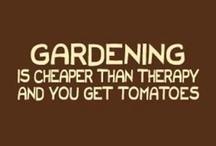 Gardening - wishes & reality... / by Trish Whelan