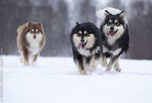 Dogs & Wolfs