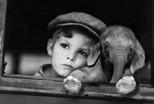 Elephants-Amazing Gentle Giants / by Shannon Griffin