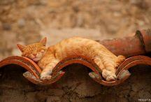 Billeder af katte