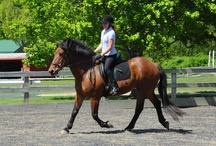 Volunteers / by High Hopes Therapeutic Riding