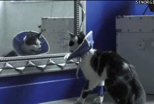 Funny cats gifs / cat, cats, cats gifs, cat gif