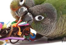 """DYI Bird Enrichment / Birds are not """"cheep"""" pets!  Our DYI Bird Supplies board is a great way to exchange ideas on how to make all kinds of bird supplies and cage accessories on a budget."""