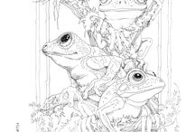 Coloring pages / coloring isn't just for kids but for all ages!