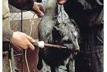 Unbelievable Cruelty