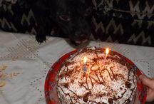 JCH.Türkiye Arwen İlina Ephesus Black / Arwen İlina Ephesus Black Staffordshire Terrier female Bosphorus Bulls Kennel Türkiye,İstanbul Facebook/Bosphorus Bulls Youtube/Bosphorus Bulls Kennel / videos.../