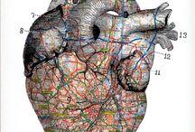 City Anatomy