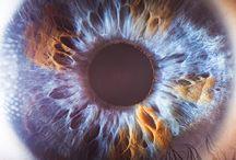 Augen die Seele des Menschen / Augen sind die Seele eines Menschen Heist es , auf alle fälle sind sie Ausdrucksstark !!!