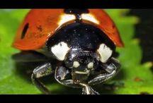 Ladybug Study