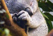 Slapende dieren