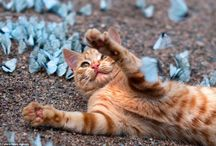 Kitten Frolicking With Butterflies / The adorable ginger tom went charging into a swarm of blue-winged butterflies trying to catch them, but after several failed attempt was forced to give up and lie down among them instead. Loveable Lepa couldn't believe his luck when he saw so many new winged friends in one place, but the butterflies were feeling a bit shy, teasing the cat by flying just out of Lepa's reach. | www.petnook.in