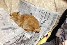 koty i inne zwierzaki