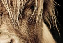 Amazing Animals / by Valerie McCarthy