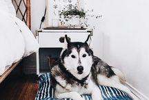 ❤️ Dogshood
