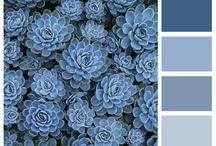 Palette / Colour combinations which inspire me..
