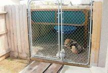 DIY animal shelters / by Kimberly Shiflett