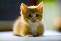 Kitties / by Barbara Folb