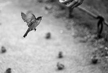bir kuş sapanı
